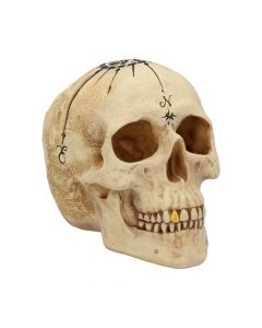 Dead Man's Map 17.5cm Skulls NN Medium Figurines Premium Range