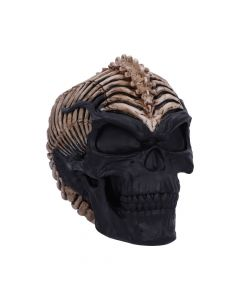 Spine Head Skull (JR) 18.5cm Skulls New Products Artist Collections