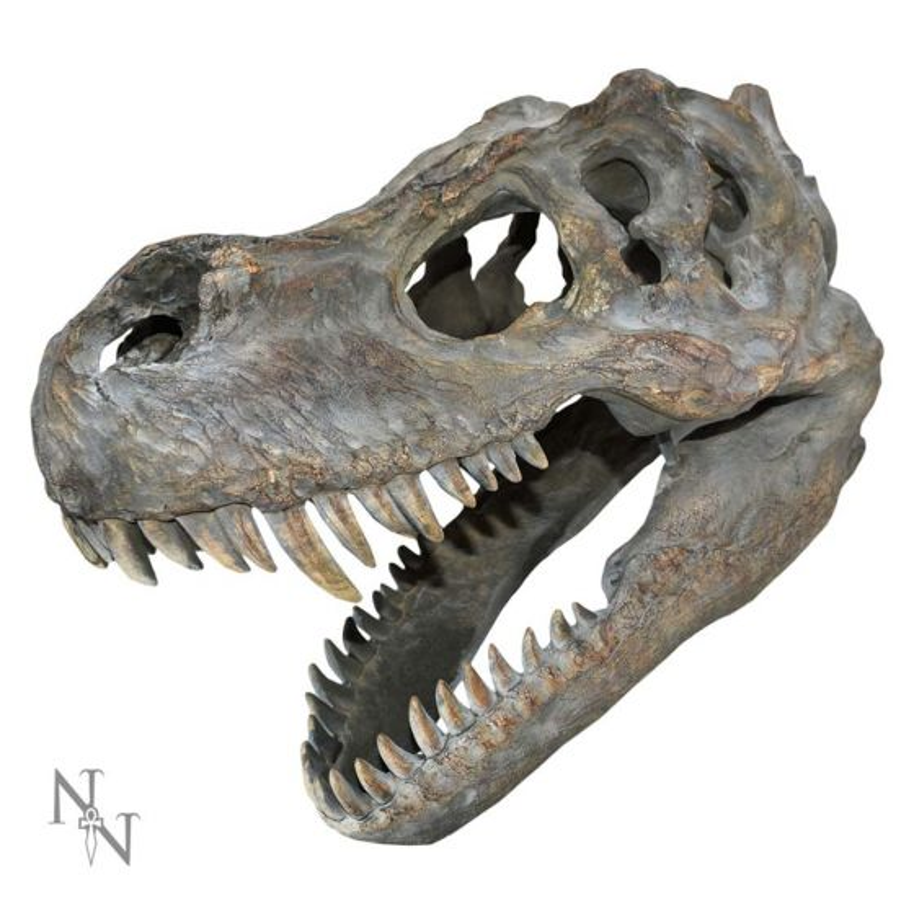 Tyrannosaurus Rex Skull Small 39.5cm B/strap Dinosaurs Wall Hanging Sculptures Premium Range