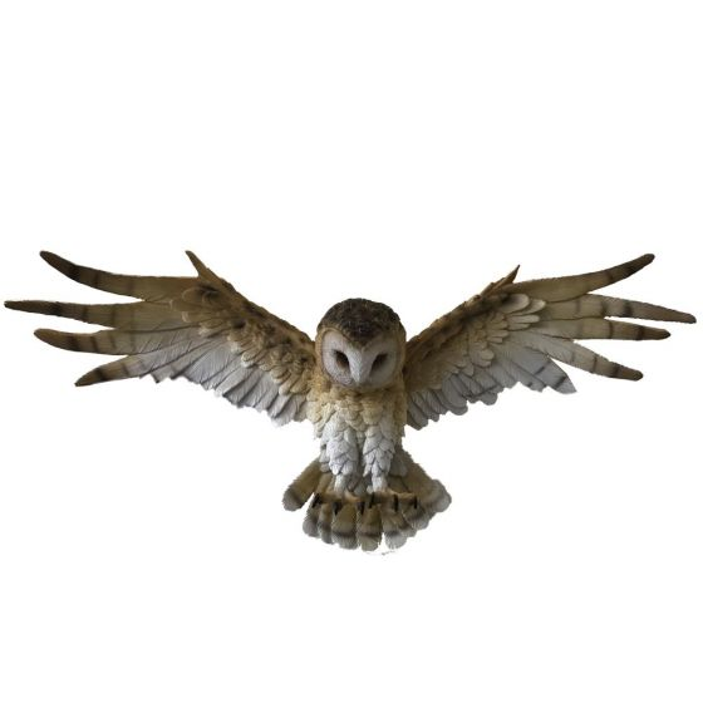 Wisdom Flight 54.5cm Owls Willow Hall Owls Nicht spezifiziert
